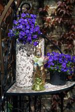 Für Birgit: Blaue Blumen!