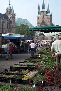 Wochenmarkt auf dem Erfurter Domplatz