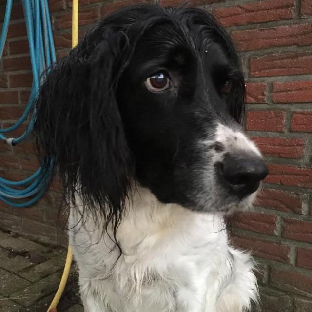 Unerwartete Sptfolge des Hochwassers Wenn sich der Hund in einemhellip